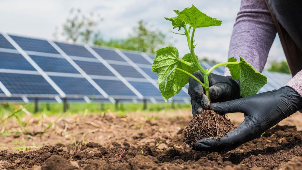 種電優點:太陽能結合農業